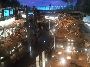 恐竜博物館会場内